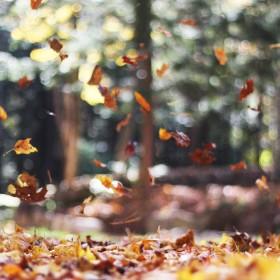 Autumn Mott